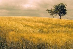 Graan veld