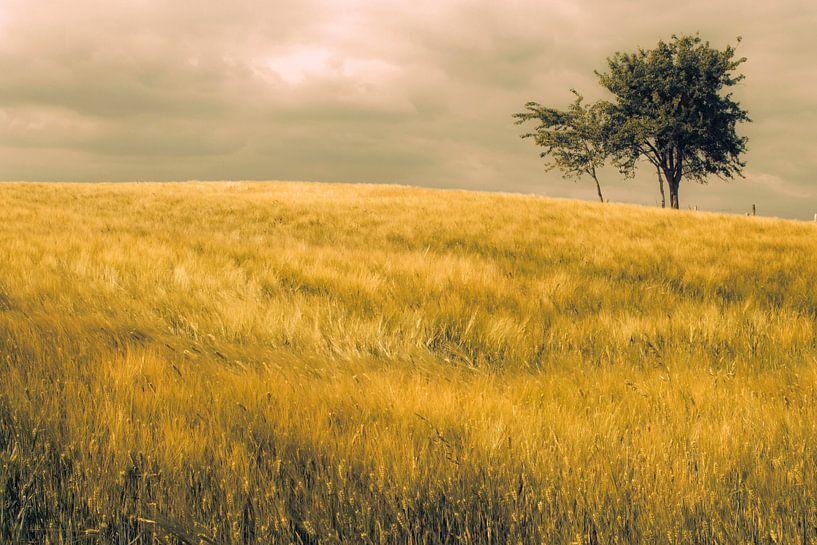 Graan veld  van marleen brauers