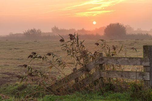 Good Morning Sunshine Hek met de zonsopkomst in de mist