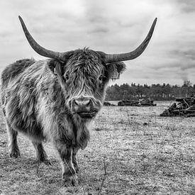 Highlander écossais sur Mark Bolijn