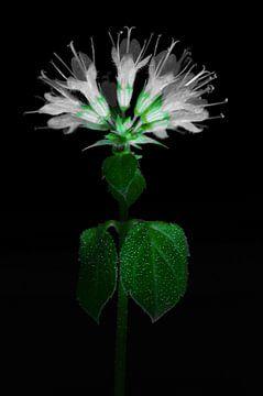 Blume in Grün & Weiß von De Rover