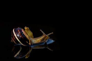 Luie slak in bad met reflectie (weerspiegeling) natuurfotografie van T de Smit