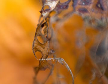 photography detail dead leafs van