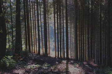 Verborgen zonlicht. van Marijke Scheers