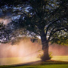 Zomer regen van Pascal Raymond Dorland