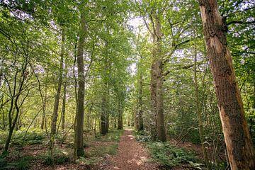 Typische Nederlandse bossen in Oirschot van Angela Kiemeneij