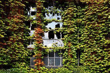 Gebroken raam op een verlaten gebouw, overgroeid met klimop van Frank Herrmann