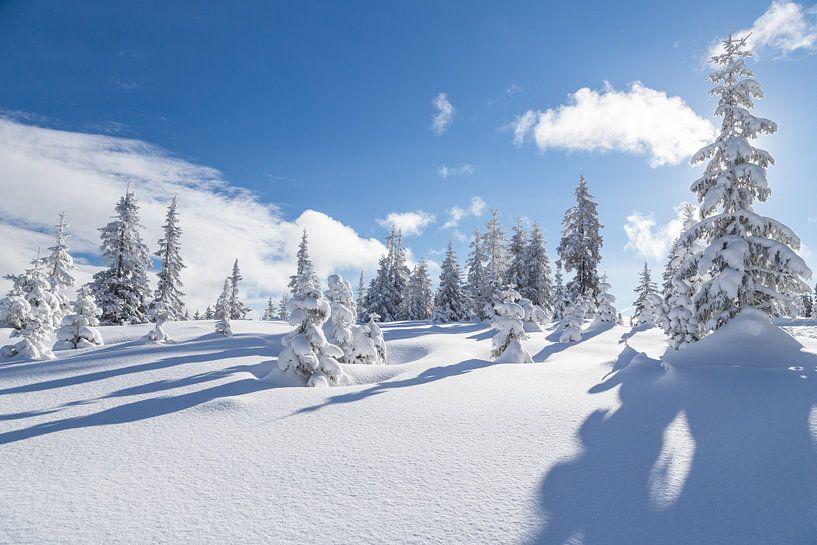 """Winterlandschaft """"Winter Wonderland"""" von Coen Weesjes"""