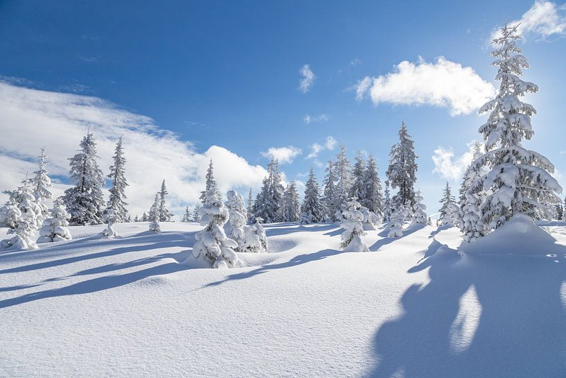 """Winterlandschap """"Winter Wonderland"""" van Coen Weesjes"""