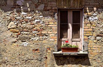 Blume im Fenster von Vincent van Kooten