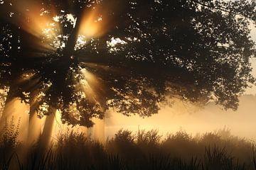 Sonnenaufgang hinter Bäumen von Jana Behr