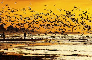 meeuwen op het strand  sur