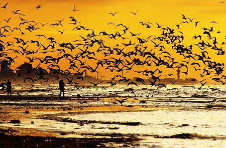 meeuwen op het strand  van Dirk van Egmond