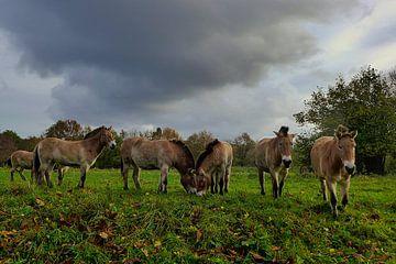 Oerpaarden onder een dreigende lucht van Anneriek de Jong