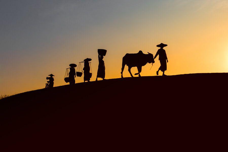 BAGHAN,MYANMAR DECEMBER 12 2015 - Landarbeiders 's avonds voor de ondergaande zon op weg naar huis.