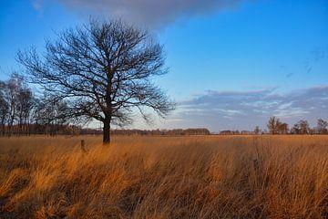 Big Peel im Winter von Verrassend Brabant