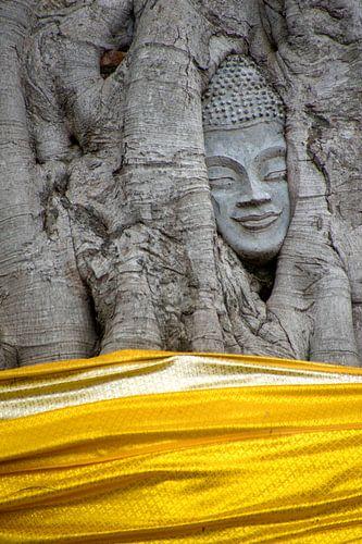 Het hoofd van Boeddha in de boom