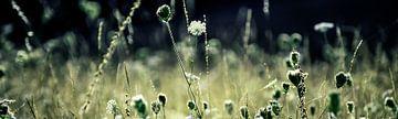 Wilde bloemenveld van Ester Overmars