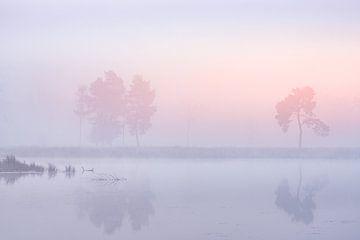 Farben im Nebel von elma maaskant