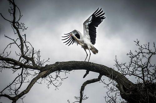 De vleugels van vrijheid
