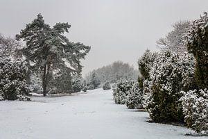 Pine Tree Winter van