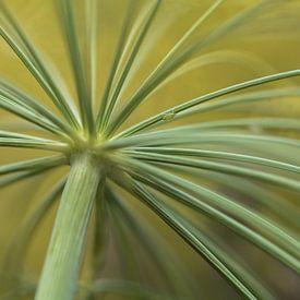 Dille   takje met een bladluis van Marianne Twijnstra-Gerrits