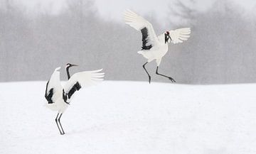 Japanse Kraanvogels II van Harry Eggens