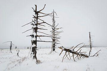 Verbrande bomen in sneeuwlandschap von Michel Lucas