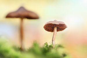 The little mushrooms