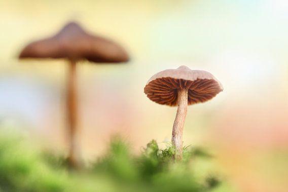 The little mushrooms van Michelle Zwakhalen