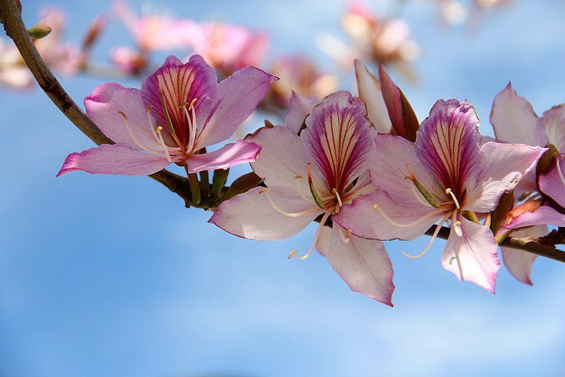 The Tree Blossom van Cornelis (Cees) Cornelissen