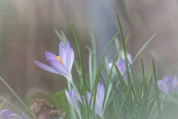 Le printemps approche sur Tania Perneel