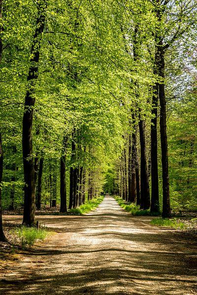 Prachtig Nederlands bos van Dennis te Lintelo