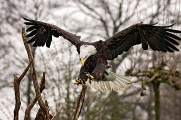 eagle landing van gea strucks