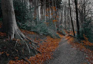 Spiel der Throne Wald von Arash Mahdawi Nader