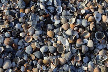 Zeeuwse schelpen van Berg Photostore