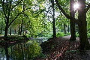 'S ochtendsvroeg in het bos in Zevenaar van