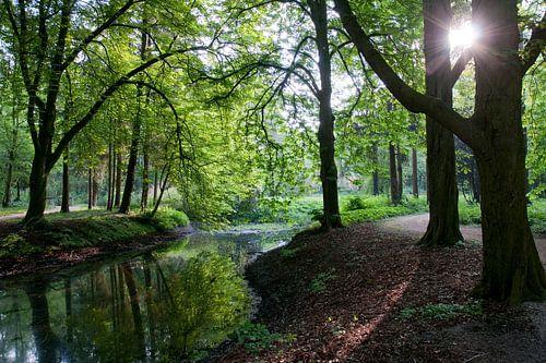 'S ochtendsvroeg in het bos in Zevenaar
