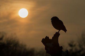 Holenuil in het avondlicht van Freddy Van den Buijs