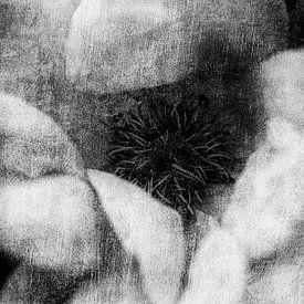 Rozenbloesem van Petra Dreiling-Schewe