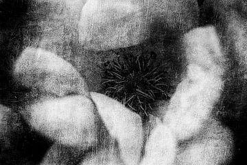 Rosenblüte von Petra Dreiling-Schewe