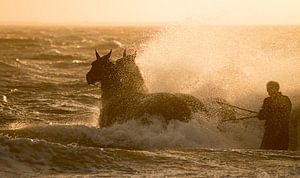 Paardenreddingsboot Ameland