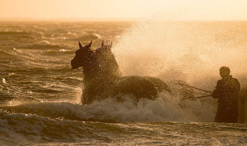 Paardenreddingsboot Ameland van Bas Ronteltap