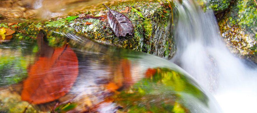 Mossman Gorge, Queensland - Australia van Van Oostrum Photography