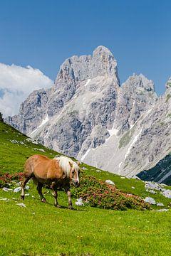 Pferd in den Bergen von Coen Weesjes