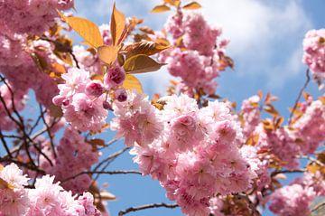 Flowers of Hyde Park von Maurice Moeliker