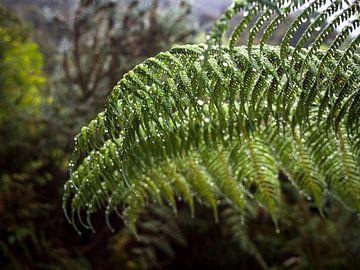 Nieuw-Zeeland - Abel Tasman National Park - Dauw op de bladeren van een varen van Rik Pijnenburg