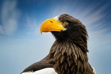 Kop van een gedetailleerde  Steller zeearend in zijaanzicht, tegen een blauw met witte lucht. van Gea Veenstra