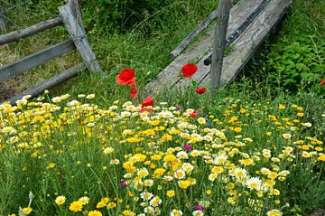 Wilde bloemen van Susanne Seidel