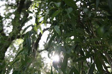 Hanging Sun van Kees Verloop
